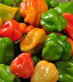 Picture of Mayan Salsa Habanera - Habanero Sauce Mexican Recipe- Item No.595-mayan-salsa-habanera