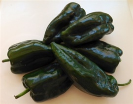 Picture of Chile Poblano Fresh Peppers also called Ancho or Pasilla Chiles- Item No.77745-31212