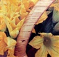 Picture of San Miguel Zucchini Flower (Flor de Calabaza) 27.5 oz - Item No. 24456-00801
