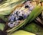 Picture of Cuitlacoche Corn Truffle Huitlacoche San Miguel 14.8 oz- Item No.24456-06550